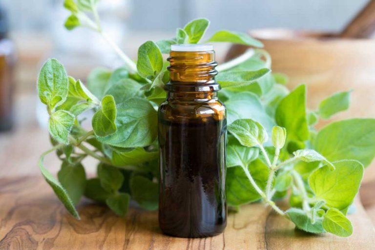 Oregano Essential Oil Benefits